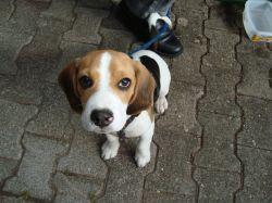 wanderhund-scotty